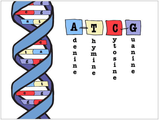 what is the four letter dna alphabet mito mightily disappoints autism researchers 23andme 24502
