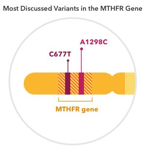 Our Take On The MTHFR Gene - 23andMe Blog
