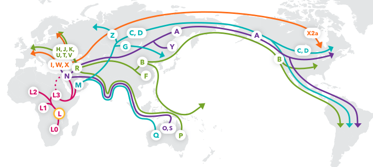 ttam_major_haplogroup_migrations