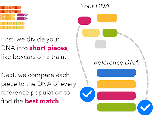 An illustration of compring DNA to reference populations