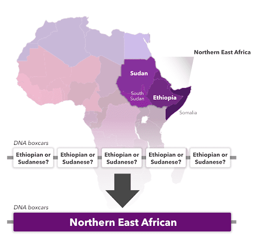 An illustration going from Ethiopian to Northern East African