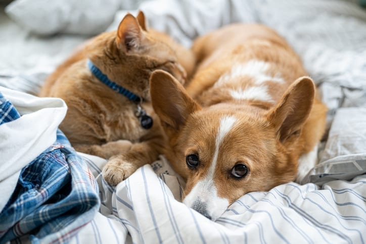 Close-Up Of Cat And Dog Sleeping On Bed At Home